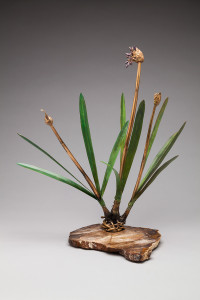 Stages: Agapanthus by Holly Carter, Photo by G Post